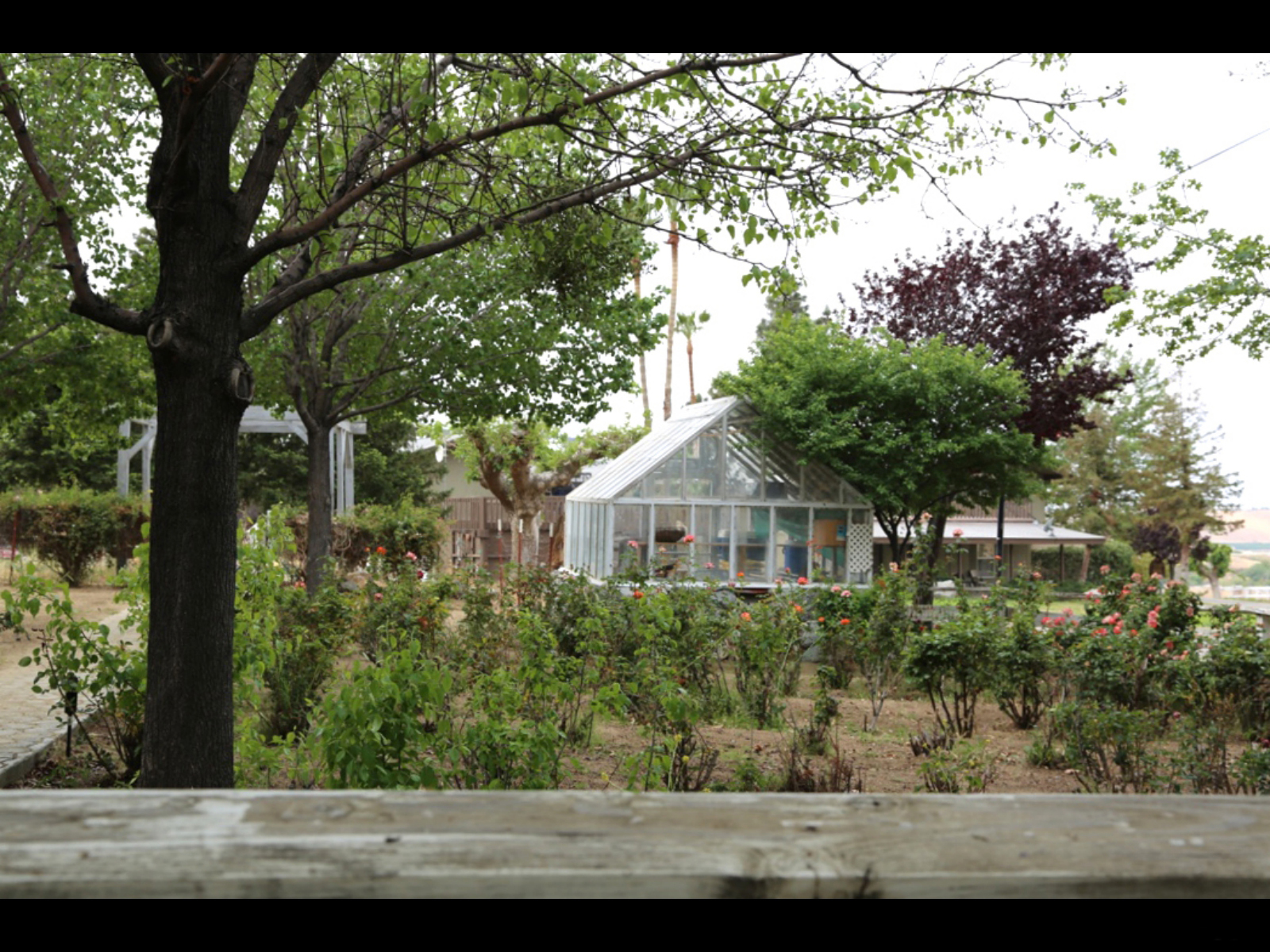 Anne Sippi Rose Garden and Green House